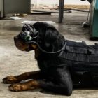 US Army exploring SBIR funded program that equips military working dogs with Augmented Reality goggles