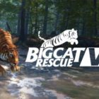 VictoryXR working with Big Cat Rescue to make the wildlife sanctuary's VR experience available to students across the US